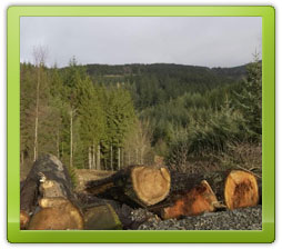 Freshly cut logs with woods in background